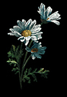 Creating with Claybord - Daisies